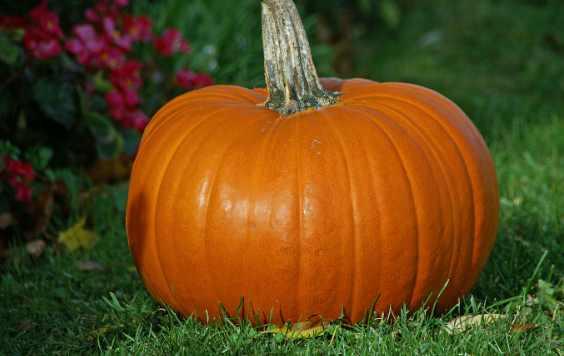 pumpkinn