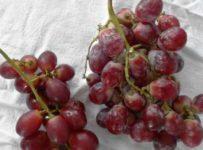 Clean Grapes