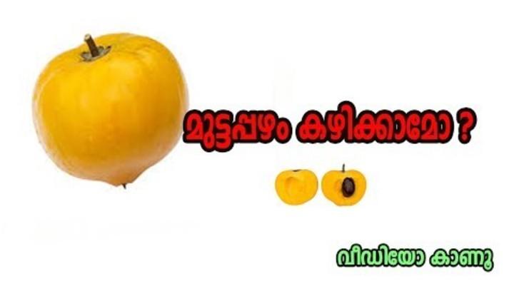 Canistel Fruit