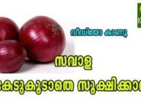 Store Onions