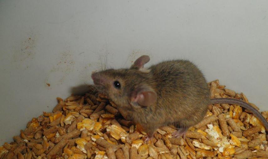 Get Rid Of Mice