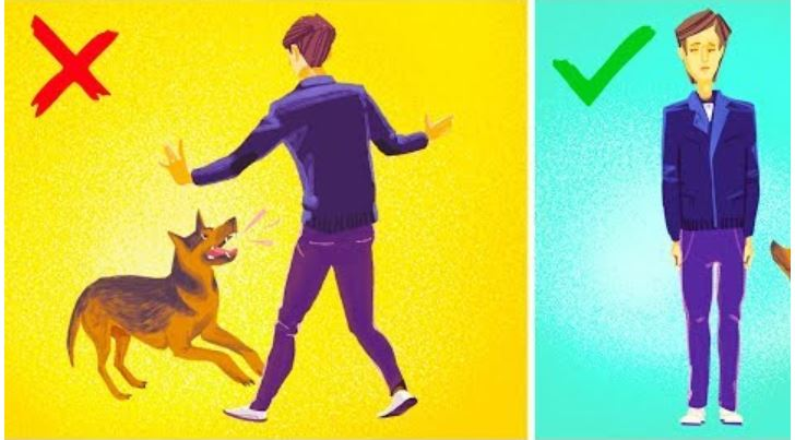 Photo of Dog Attacks – How to Survive a Dog Attack