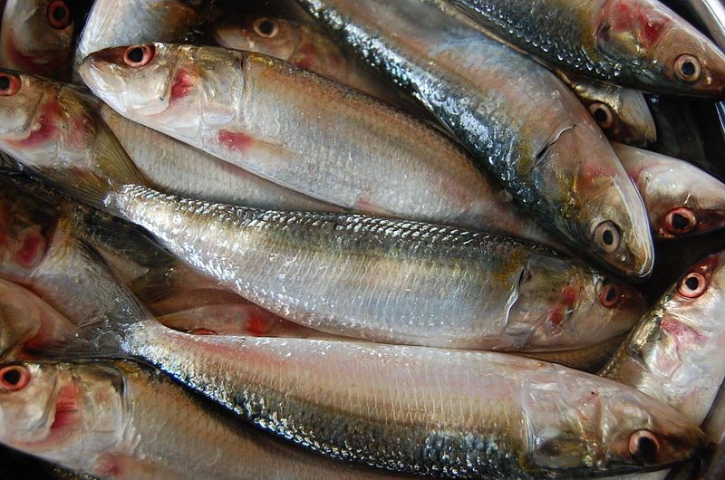 Photo of Meat in the fish recognizable very easy