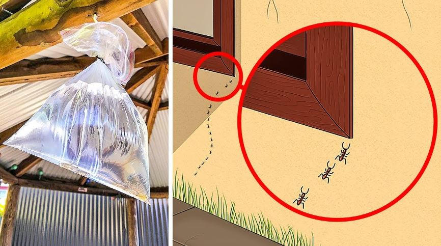 Photo of Natural ways to get rid of insects in your home