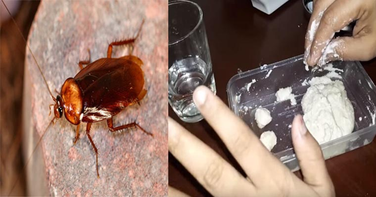 Natural Home Remedies To Get Rid Of Roaches Home Pictures Easy Tips