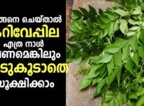 keep Curry Leaves Fresh