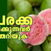 Benefits of Guava we bet you didn't know