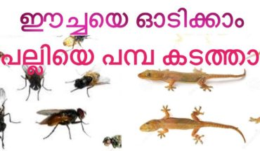 how to get free our home from home fly and lizard