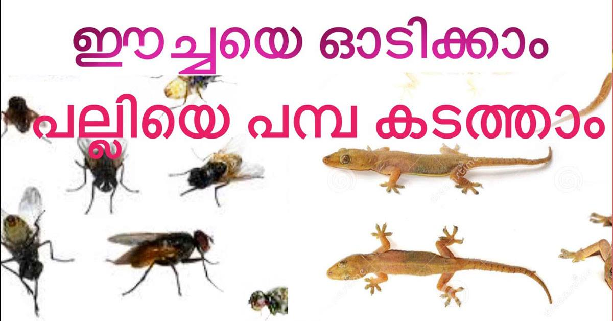 Photo of how to get free our home from home fly and lizard