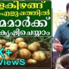 Grow Potatoes easily in container at your home