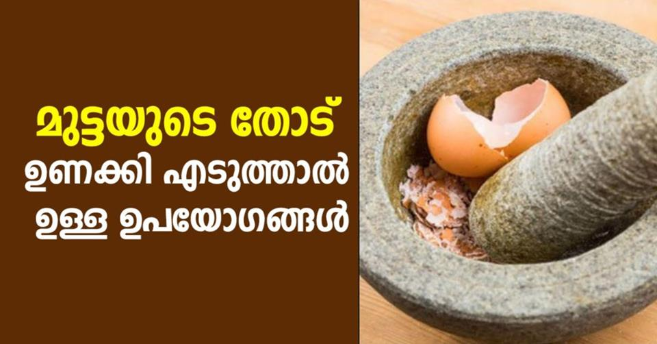 Photo of Smart Reasons You Should Be Keeping Your Eggshells
