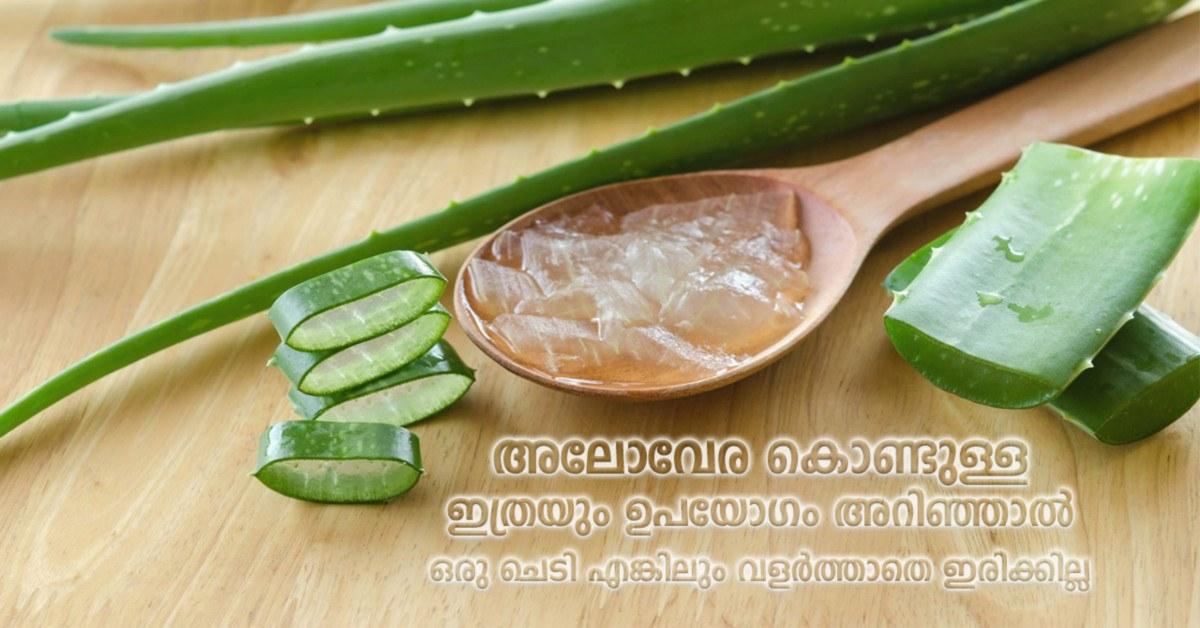 Photo of Aloevera uses