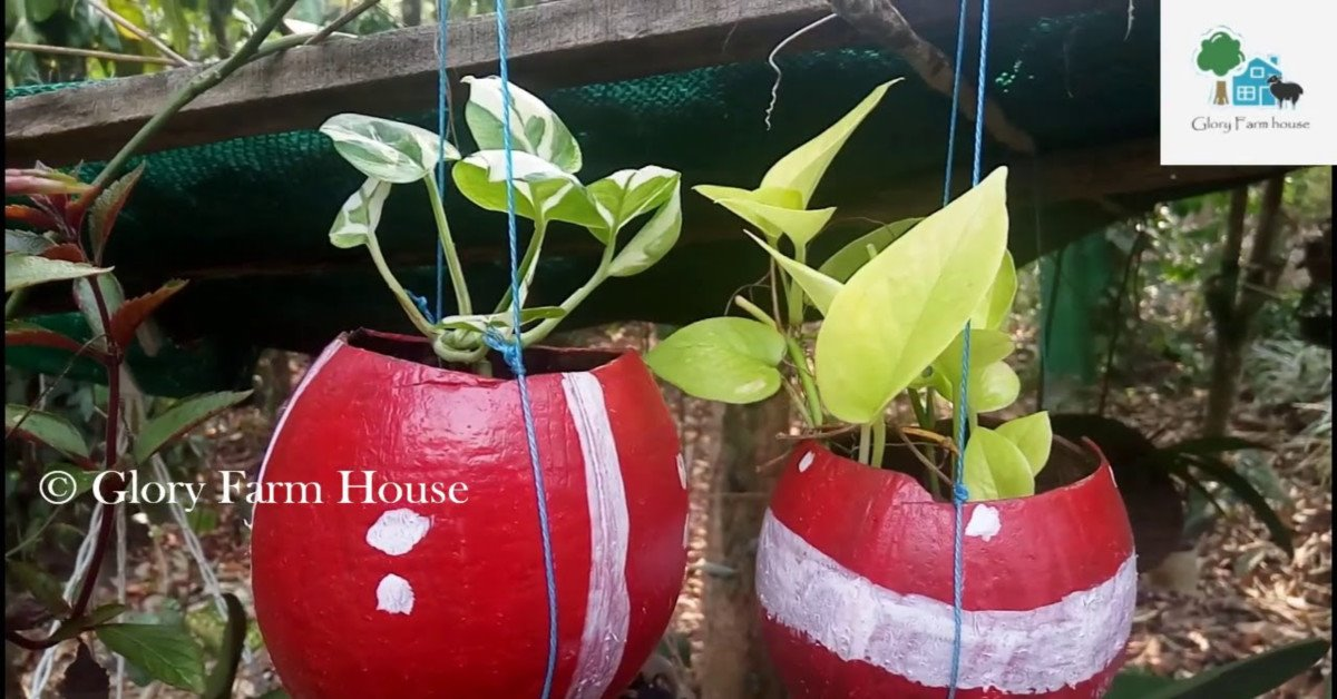 Photo of Money Plant Care in Malayalam