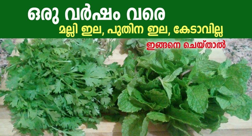 Photo of How To Store Fresh Coriander?