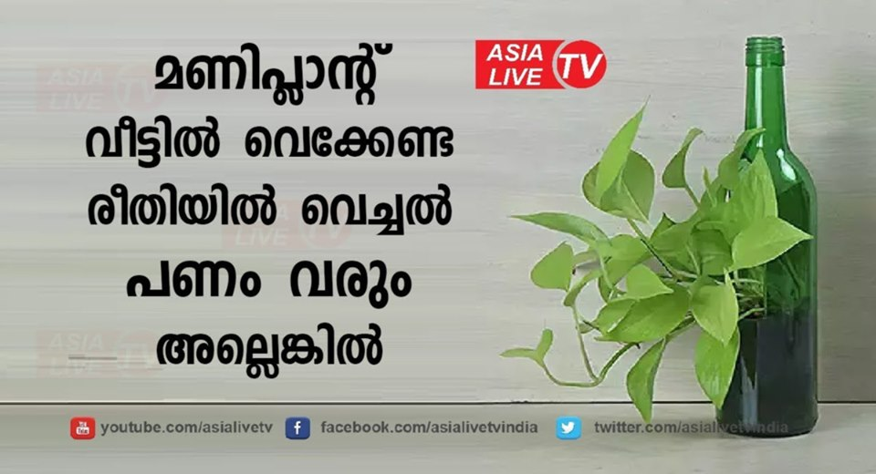 Photo of Vastu Tips to Ensure That Your Money Plant Attracts Wealth