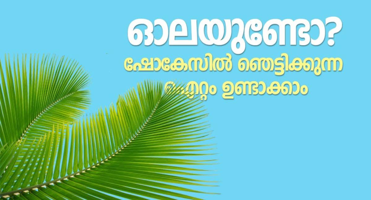 Photo of Uses of Coconut Trees